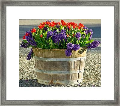 Garden In A Bucket Framed Print