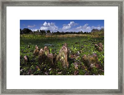 Garden In The Glades Framed Print by Debra and Dave Vanderlaan