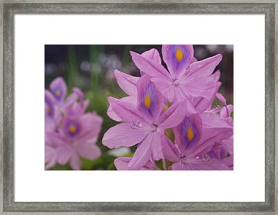 Framed Print featuring the photograph Garden Is Watching by Miguel Winterpacht