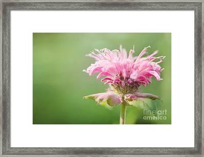 Garden Jester Framed Print by Beve Brown-Clark Photography