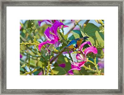 Garden Jewels Framed Print