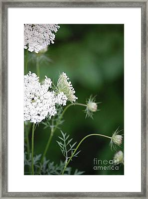 Garden Lace Group By Jammer Framed Print