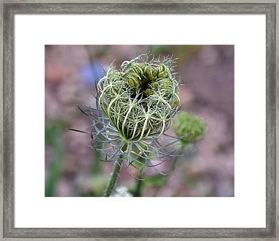 Garden Lace Framed Print by Larry Jones