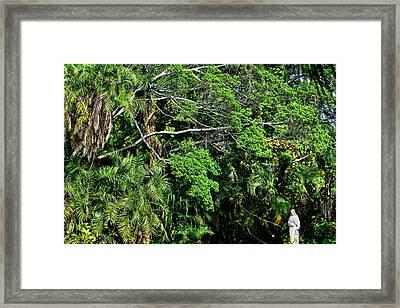 Garden Of Eden Framed Print by Joanna Madloch
