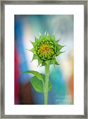 Framed Print featuring the photograph Garden Of Many Colors by Gwyn Newcombe