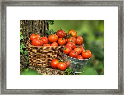 Garden Of Paradise Framed Print by Don Wolf