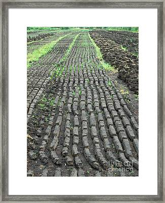 Framed Print featuring the photograph Garden Of Peat by Brenda Brown