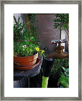 Garden On The Flatiron Patio Framed Print