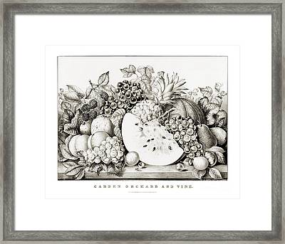 Garden Orchard And Vine - 1867 Framed Print