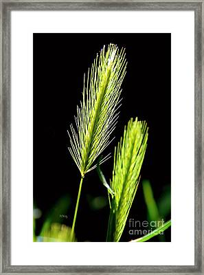 Garden Oxymoron Framed Print