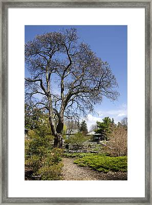 Garden Path Landscape Framed Print by Christina Rollo