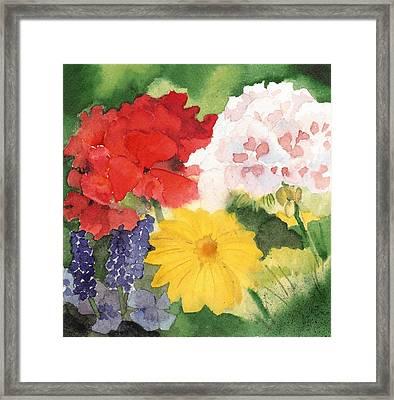 Garden Phlox Framed Print by Susan Crossman Buscho