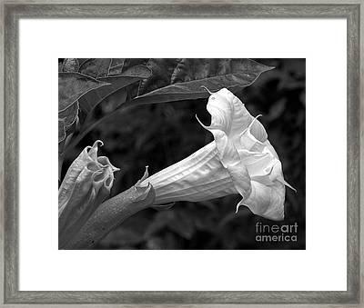 Garden Purity Framed Print by Robert Pilkington