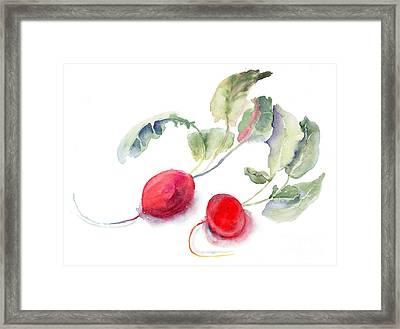 Garden Radish Framed Print