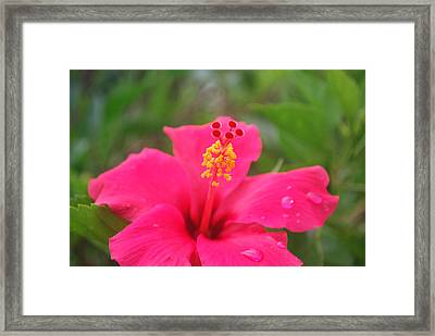 Framed Print featuring the photograph Garden Rains by Miguel Winterpacht
