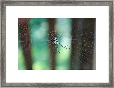 Garden Spider Framed Print