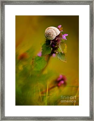 Garden Stories Xxi Framed Print