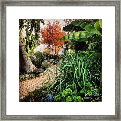 A Stroll Through The Garden Framed Print