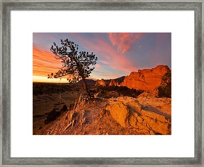 Garden Sunrise Framed Print