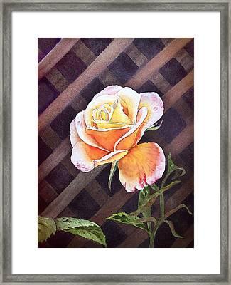 Garden Tea Rose Framed Print by Irina Sztukowski