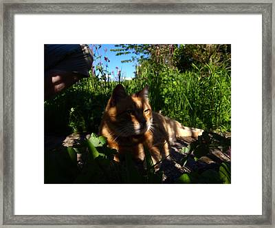 Garden Tiger Framed Print