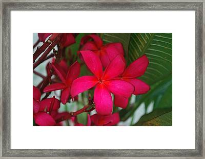 Framed Print featuring the photograph Garden Treasures by Miguel Winterpacht