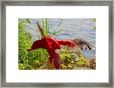 Garden Variety Lobster Framed Print