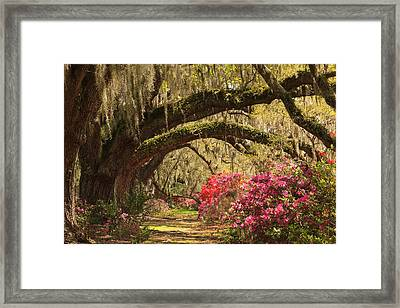 Framed Print featuring the photograph Garden View by Patricia Schaefer