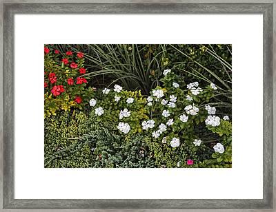 Garden White Framed Print