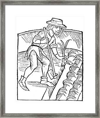 Gardener Planting Leeks Framed Print by Granger