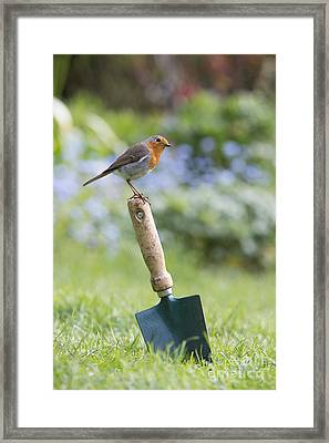 Gardeners Friend Framed Print by Tim Gainey