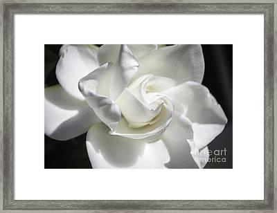 Gardenia Framed Print by Arlene Carmel