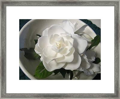 Gardenia Bowl Framed Print by Deborah Lacoste