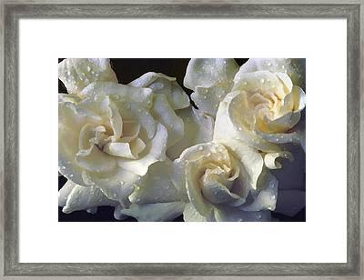 Gardenia I Framed Print