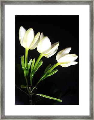 Gardenia Trio Series Framed Print by Ange Sylvestri