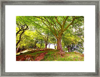 Gardening Framed Print by Boon Mee
