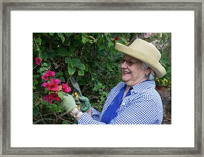 Gardening In Later Life Framed Print by Alex Rotas