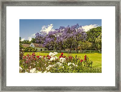 In Bloom Framed Print by Maria Coulson