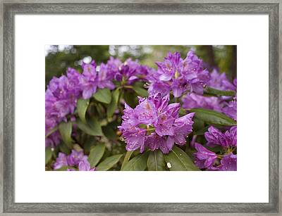 Framed Print featuring the photograph Garden's Welcome by Miguel Winterpacht