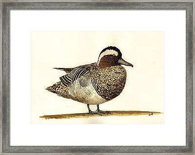 Garganey Duck Framed Print