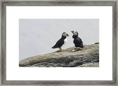 Gargle  Framed Print by Jim  Hatch