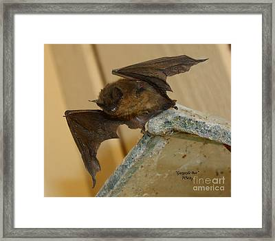 Gargoyle Bat Framed Print