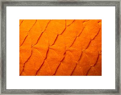 Garibaldi Skin Framed Print by Jeffrey Rotman