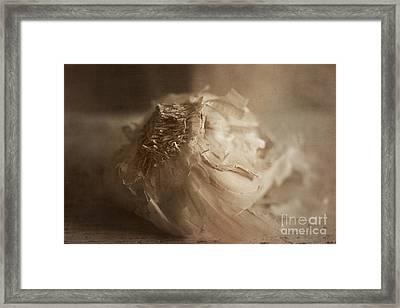 Garlic 1 Framed Print by Elena Nosyreva