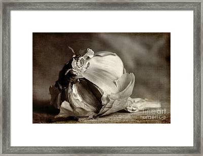 Garlic 3 Framed Print by Elena Nosyreva