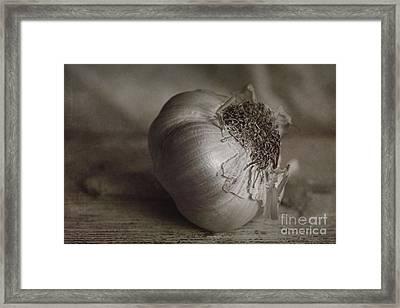 Garlic 4 Framed Print by Elena Nosyreva