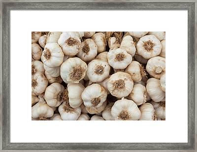 Garlic (allium Sativum Framed Print