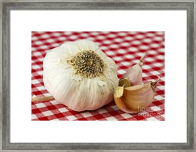 Garlic Framed Print by Blink Images