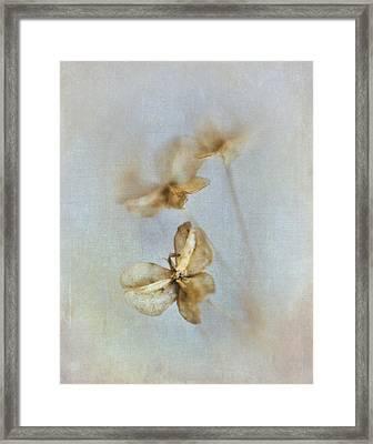 Garlic Chive Seed Heads IIi Framed Print