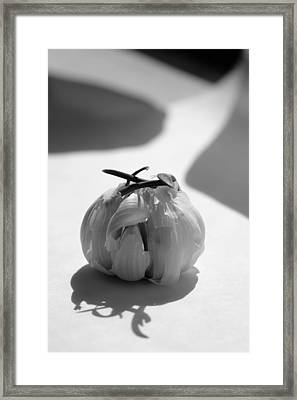 Garlic Cove B1 Framed Print